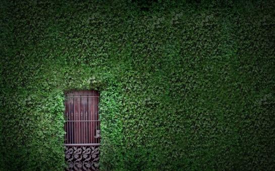 -Nature-Houses-Doors-Vines-Hd-Wallpaper--
