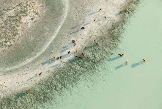 2-Zack-Seckler-Botswana-Robin-Rice-Gallery-yatzer-612x414