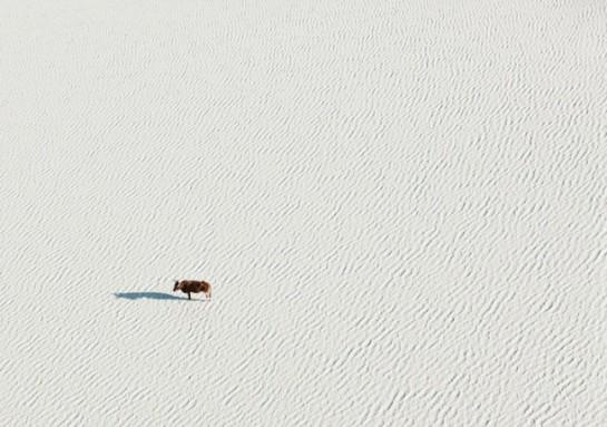 3-Zack-Seckler-Botswana-Robin-Rice-Gallery-yatzer-612x431