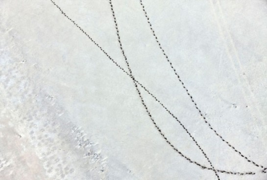 9-Zack-Seckler-Botswana-Robin-Rice-Gallery-yatzer-612x414