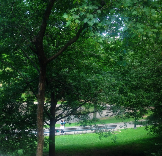 Lovers through the trees - Central Park