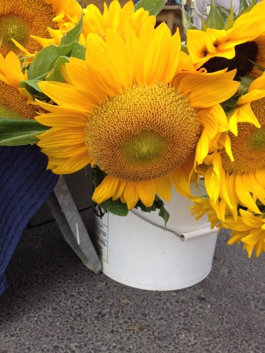 My friends send me sunflower pictures all the time. This one is from Vermont.